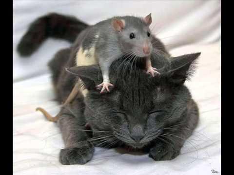 Comme souvent au chat persécuter des helminthes
