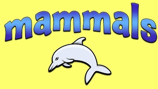 Mammals - Learn About Mammals For Kids