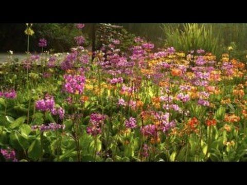 Teichsanierung Teil 3 - Bepflanzung und Teichufer