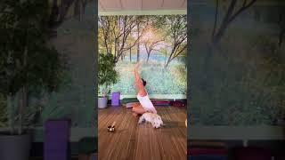Yoga Practice with Charla