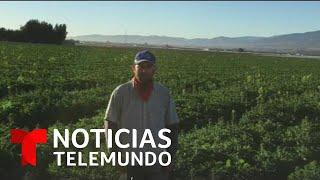 Noticias Telemundo, 12 de diciembre 2019 | Noticias Telemundo