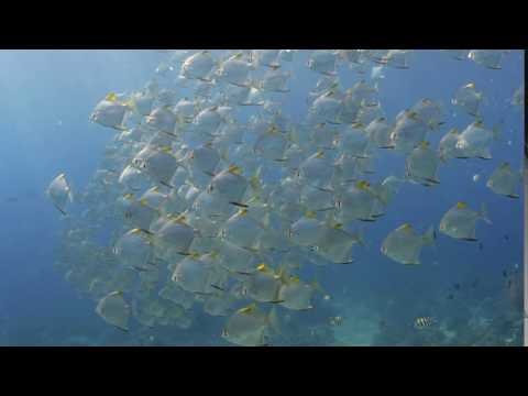 Scuba diving in Indonesia