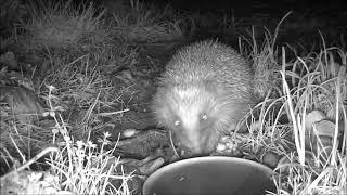 Wildlife Trail Camera - 26.12.2018