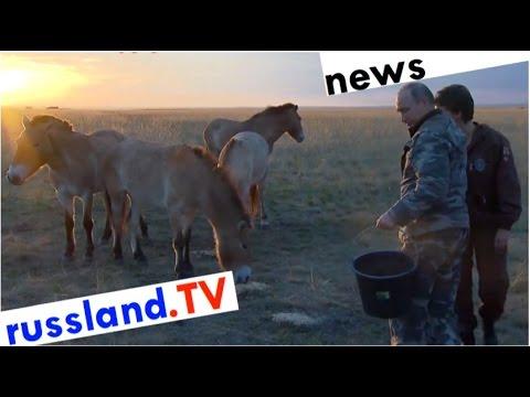 Putin als Pferdeflüsterer [Video]