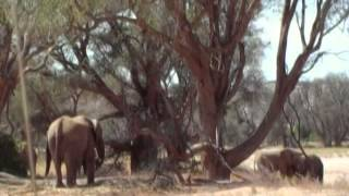 AIEA: 1° Corso per guide safari professionali (Namibia)