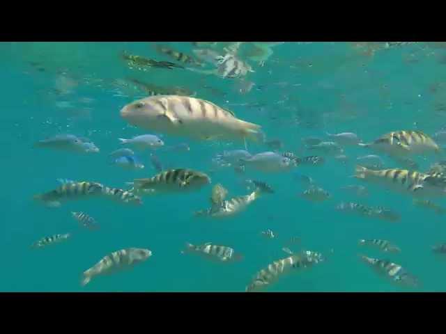 Snorkeling At Blue Lagoon In Padangbai, Bali