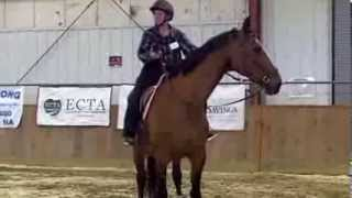 Warmblood from Bitted to Dr. Cook's bitless bridle Topsfield Fair demo 2012
