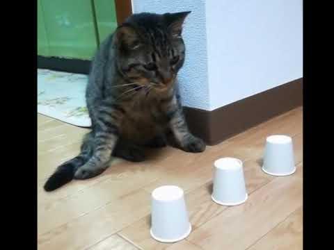 Кот напёрсточник ))