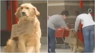 This Dog Was Sat All Alone Outside Target  Then People Looked Closer At The Sign Around His Neck.