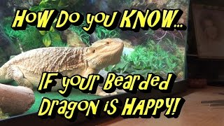 How Do You Know If Your Bearded Dragon Is Happy?