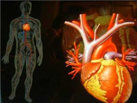 Patogénesis de complicaciones en la diabetes mellitus tipo 2