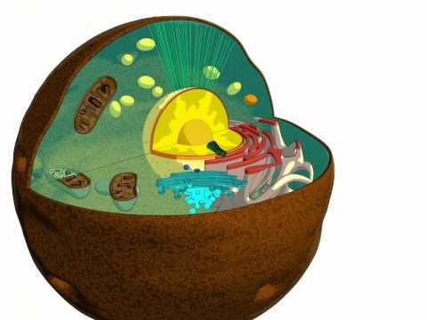Parassiti in un organismo dolce