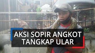 Sopir Angkot di Bogor Tangkap Ular Sepanjang Tiga Meter yang Tiba-tiba Muncul dari Saluran Air