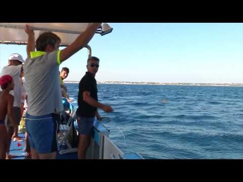 Pesca di video di una carpa