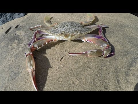 Catch n' Cook Hawaiian Crabs (GoPro in Crab Trap!)
