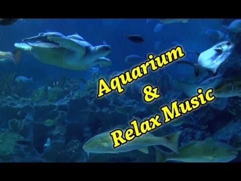 AQUARIUM 54 min Full HD & relax music