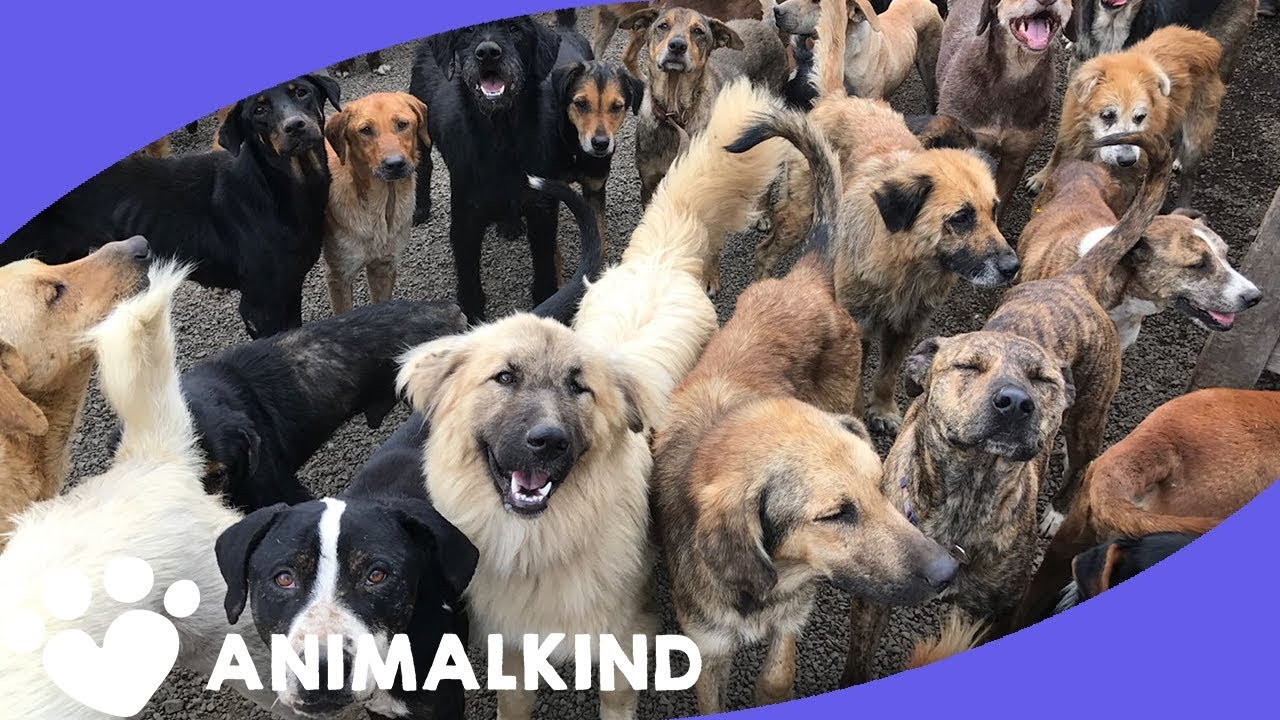 Woman adopts a thousand stray dogs, this is where they all live