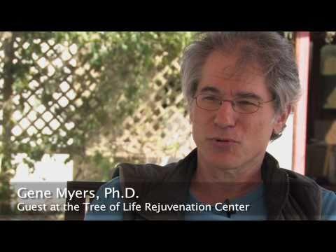 Les avantages et les inconvénients de carottes dans le diabète