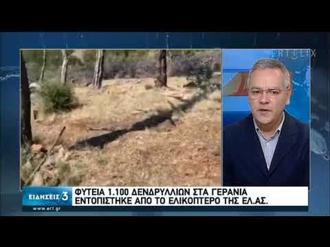 Φυτεία κάνναβης στα Γεράνια Όρη εντόπισε ελικόπτερο της ΕΛ.ΑΣ | 11/07/20 | ΕΡΤ