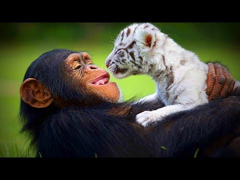 Animal's Best friends 🐶🐱 Unbelievable Animals Friendship (Full) [Funny Pets]