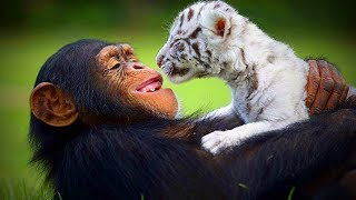 Animal's Best friends  Unbelievable Animals Friendship (Full) [Funny Pets]
