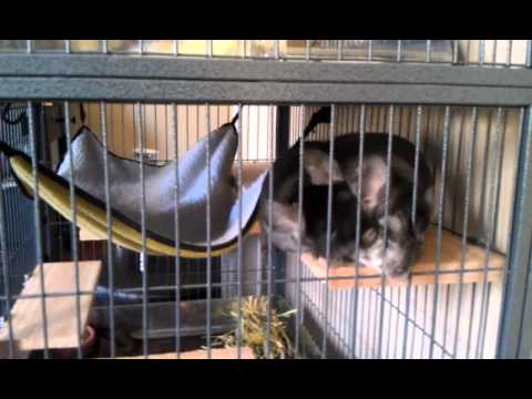 My Chinchilla Cage and General Ownership Information