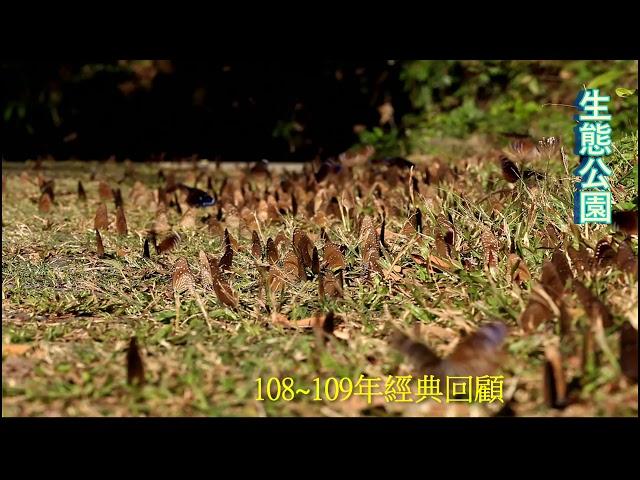 <html> <body> Film for Purple Butterfly2020-3-30 </body> </html>