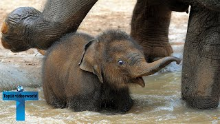 Top 60 Most Funny And Cute Baby Elephant Videos Compilation #2