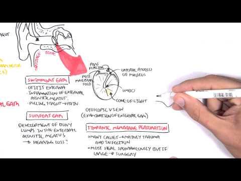 Anatomia ucha środkowego