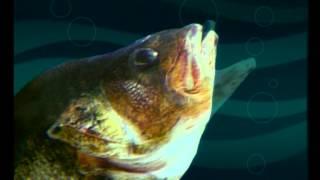 Диалоги о рыбалке окунь зима