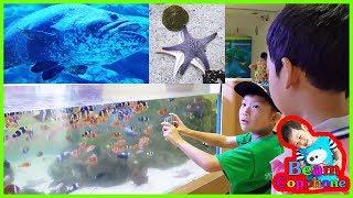 น้องบีม | ดูปลาดาวปลาการ์ตูน เที่ยวบึงฉวากสุพรรณบุรี Fish