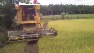 Mesin Padi 1545 S Menuai Padi Di Pokok Tampang (Ahad 7 9 2014)