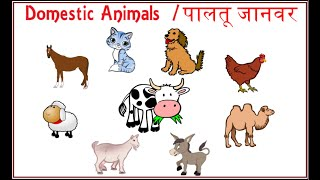 Learn Domestic Animal Names || Farm Animals for Kids in English and Hindi || पालतू जानवरों के नाम