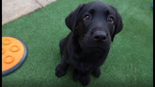 2018 Guide Dogs Graduation Day - Journey of a Guide Dog