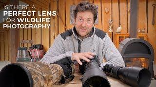 BEST LENS FOR WILDLIFE PHOTOGRAPHY   Nikon 180-400 vs Nikon 600mm vs Tamron 150-600  [photo friday]
