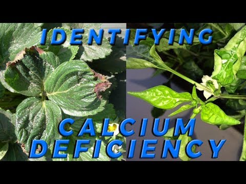 , title : 'Lesson 4: How to Identify Calcium Deficiency in Crops