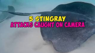 5 Stingray Attacks Caught On Camera & Spotted In Real Life!