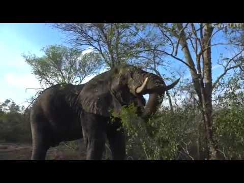 How to read elephant body language