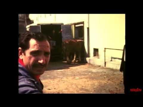 Video sesso con i cavalli da tenere docchio