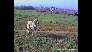 Бахарев Туркмения 1990 год