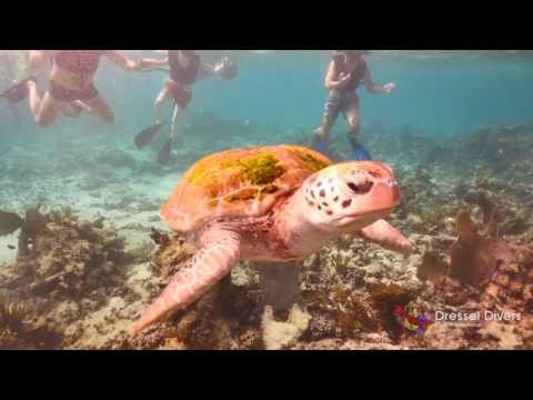 Snorkeling PLAYA DEL CARMEN, RIVIERA MAYA, Dressel Divers Snorkel Center