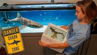 SAVING Pet SHARK Turns Into DANGEROUS Fish Transfer...