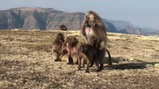 The Simien Mountains National Park (Ethiopia)