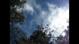 Adventures in Hawaii: Hosmer's Grove