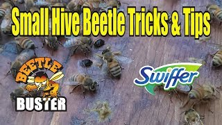 Small Hive Beetle Tips & Tricks / Hive Beetle Management