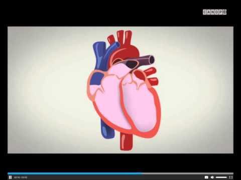 Tonomètre pour mesurer la pression artérielle acheter pas cher