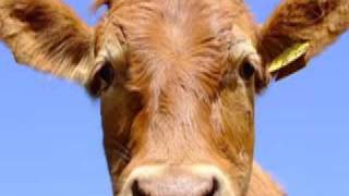 I Am Cow Music Video (my version)