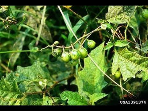 Талисман зеленодольск ул татарстана