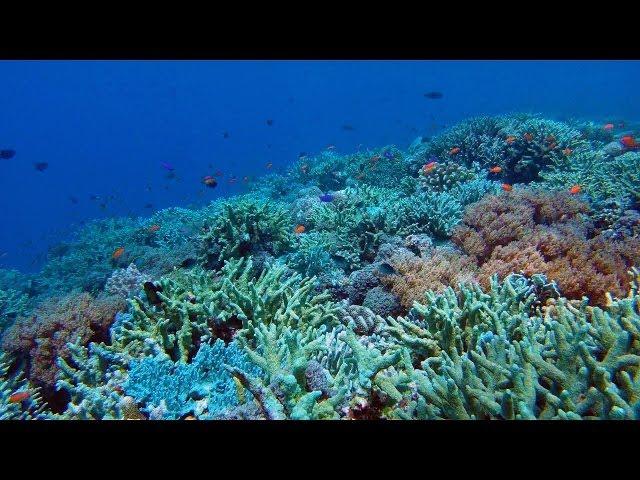 Tubbataha Reef Diving via Expedition Fleet Oceanic Explorer