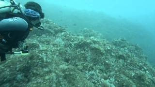 preview picture of video 'Punta Quepos November 1st - Diving Costa Rica'